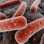 coli bacterieën
